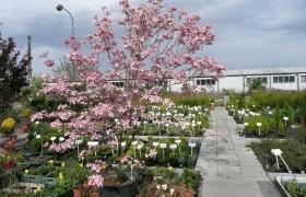Zahradní centrum 2